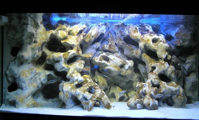 déco aquarium pour cichlides