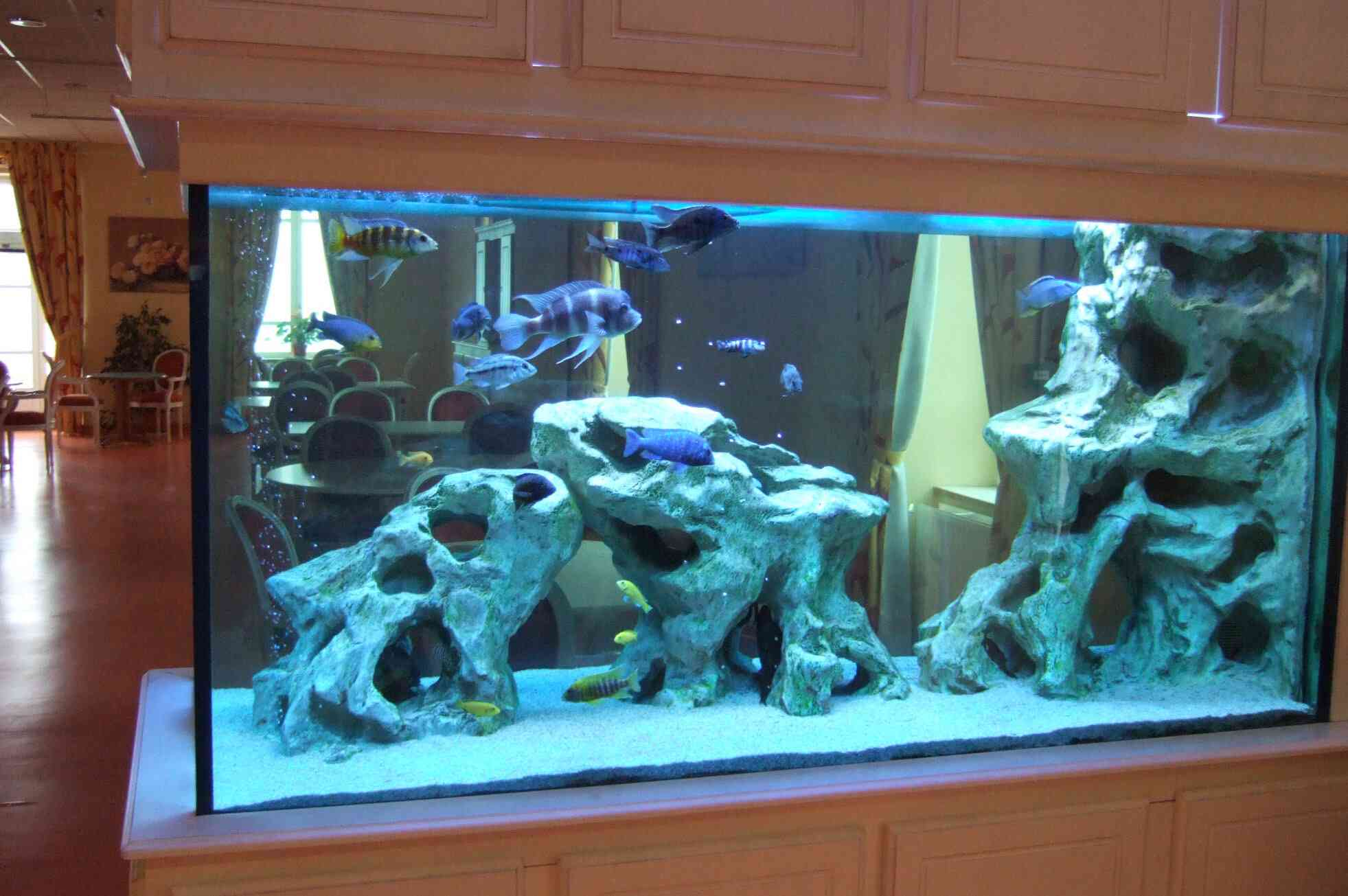 décoration aquarium moderne