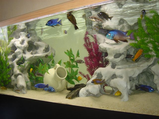 décoration aquarium pierre