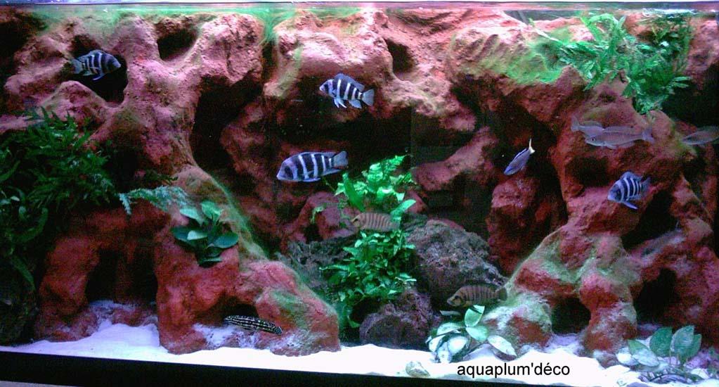 décoration aquarium tanganyika